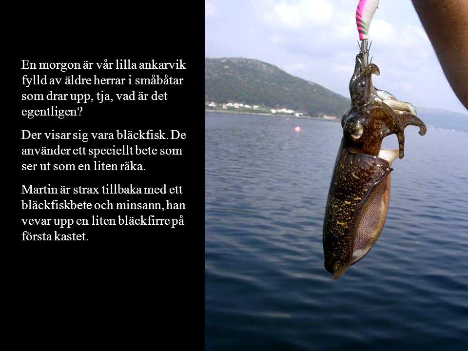En morgon är vår lilla ankarvik fylld av äldre herrar i småbåtar som drar upp, tja, vad är det egentligen? Der visar sig vara bläckfisk. De använder e