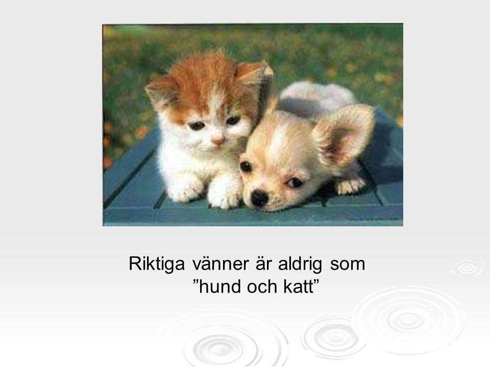 """Riktiga vänner är aldrig som """"hund och katt"""""""