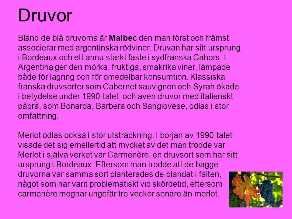 Druvor Bland de blå druvorna är Malbec den man först och främst associerar med argentinska rödviner. Druvan har sitt ursprung i Bordeaux och ett ännu
