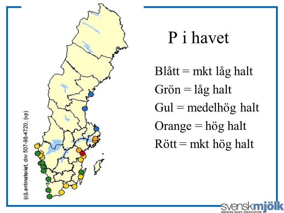 P i havet Blått = mkt låg halt Grön = låg halt Gul = medelhög halt Orange = hög halt Rött = mkt hög halt