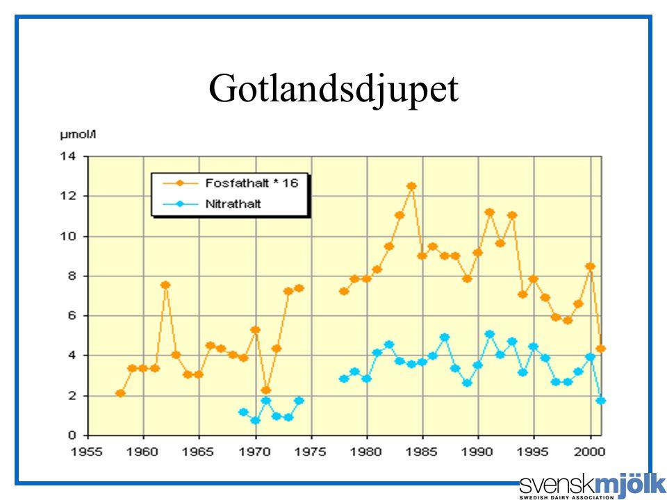 Gotlandsdjupet