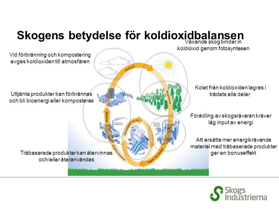 Skogens betydelse för koldioxidbalansen Växande skog binder in koldioxid genom fotosyntesen Kolet från koldioxiden lagras i trädets alla delar Förädli