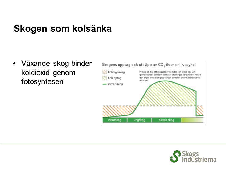 Skogen som kolsänka Växande skog binder koldioxid genom fotosyntesen