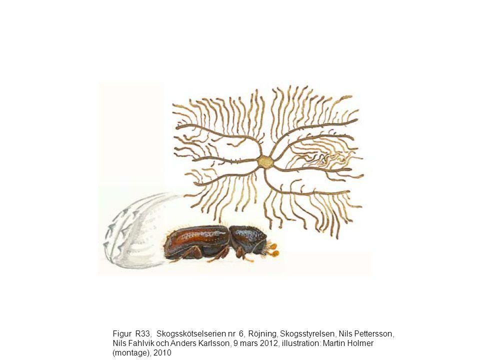 Figur R34, Skogsskötselserien nr 6, Röjning, Skogsstyrelsen, Nils Pettersson, Nils Fahlvik och Anders Karlsson, 9 mars 2012, illustration: Martin Holmer (montae), 2010