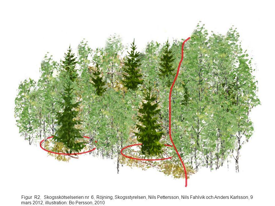 Figur R3, Skogsskötselserien nr 6, Röjning, Skogsstyrelsen, Nils Pettersson, Nils Fahlvik och Anders Karlsson, 9 mars 2012, illustration: Bo Persson, 2010
