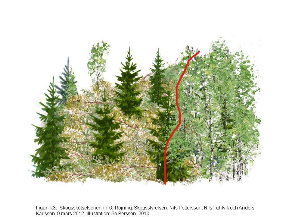 Figur R4, Skogsskötselserien nr 6, Röjning, Skogsstyrelsen, Nils Pettersson, Nils Fahlvik och Anders Karlsson, 9 mars 2012, illustration: Bo Persson, 2010