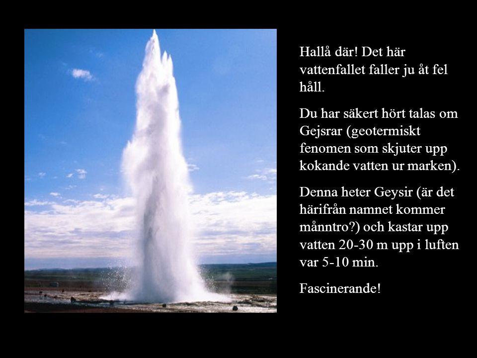 Hallå där! Det här vattenfallet faller ju åt fel håll. Du har säkert hört talas om Gejsrar (geotermiskt fenomen som skjuter upp kokande vatten ur mark