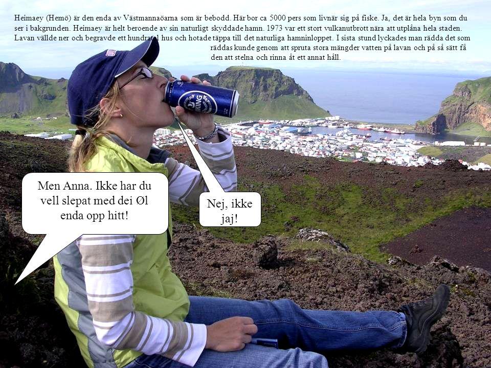 Nej, ikke jaj! Heimaey (Hemö) är den enda av Västmannaöarna som är bebodd. Här bor ca 5000 pers som livnär sig på fiske. Ja, det är hela byn som du se