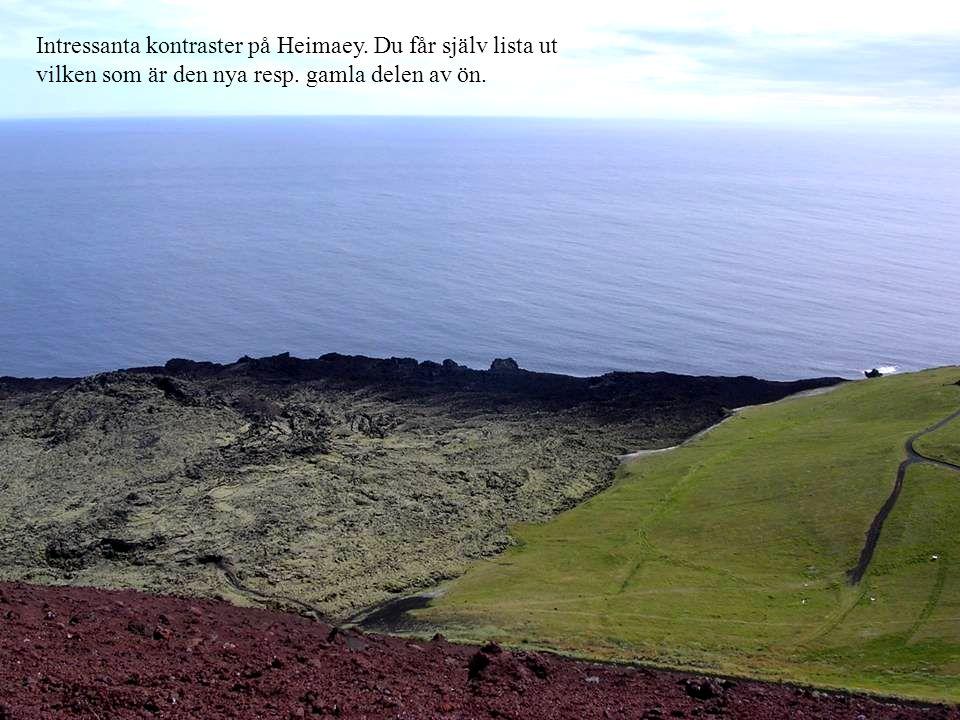 Intressanta kontraster på Heimaey. Du får själv lista ut vilken som är den nya resp. gamla delen av ön.