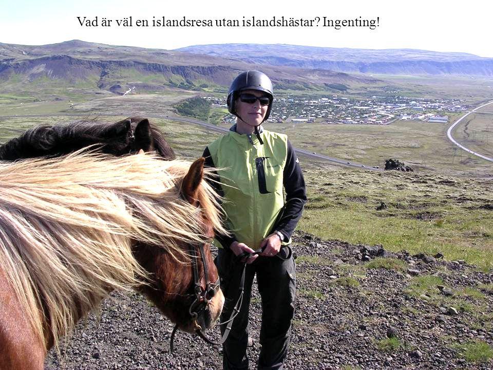 Vad är väl en islandsresa utan islandshästar? Ingenting!