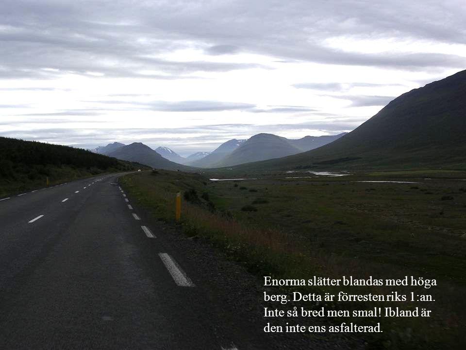 Island är inte direkt frodigt.Man kan närmast beskriva landskapet som svensk högfjällsterräng.