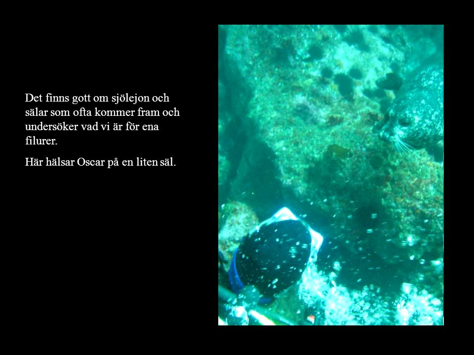 Det finns gott om sjölejon och sälar som ofta kommer fram och undersöker vad vi är för ena filurer.