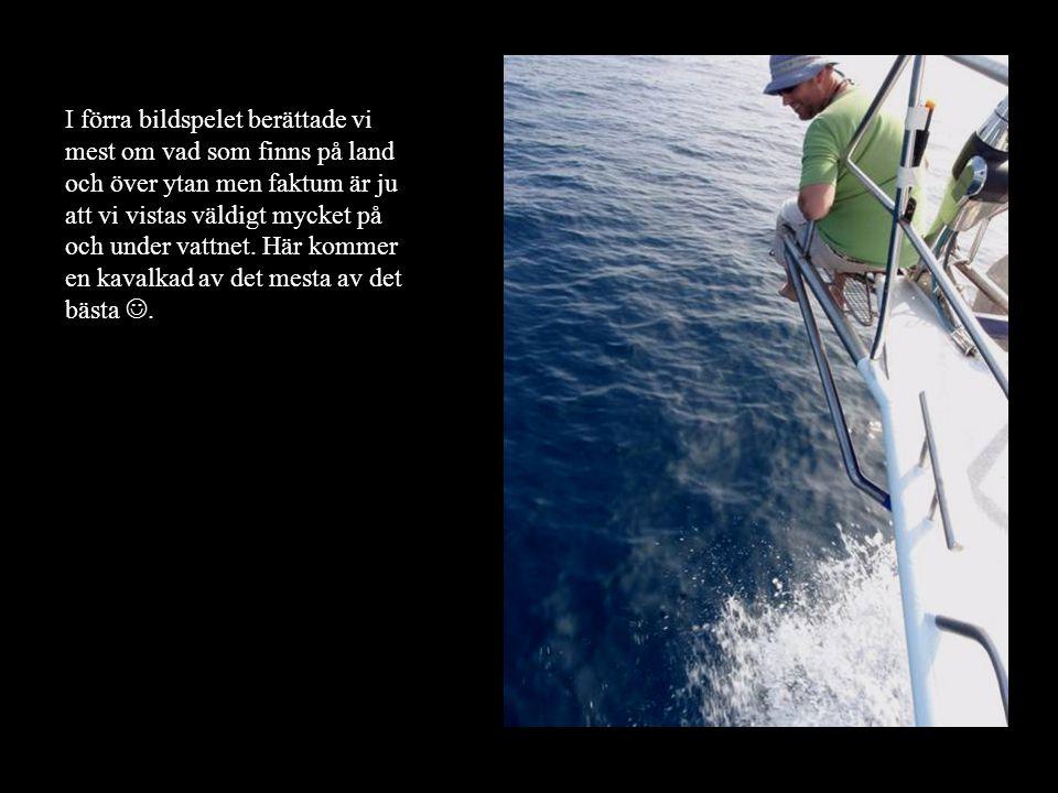 Trots idogt fiskande har vi inte riktigt skördat några större framgångar än.