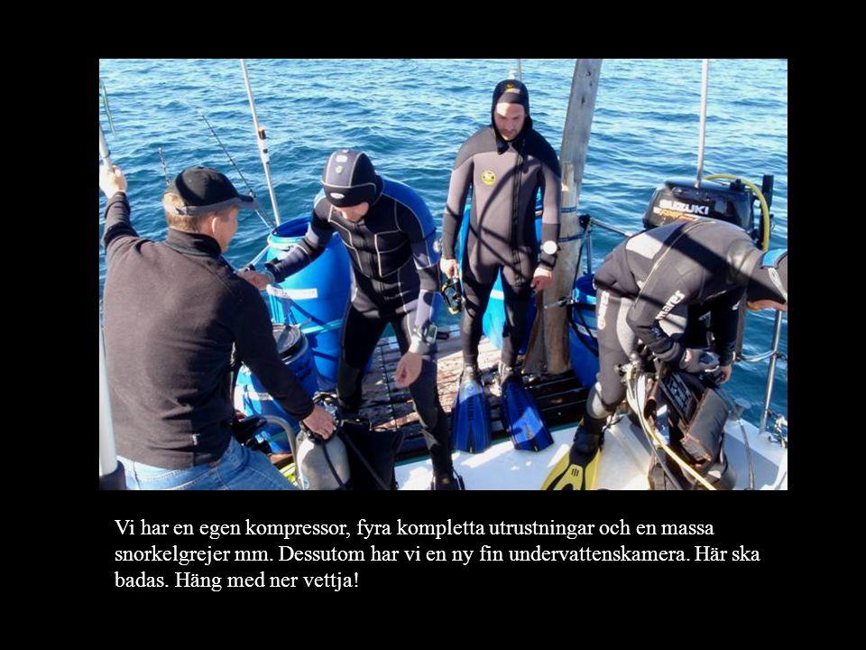 Delfinerna hälsar på oss dagligen.Det finns flera olika arter.