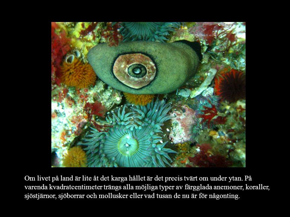 Om livet på land är lite åt det karga hållet är det precis tvärt om under ytan.