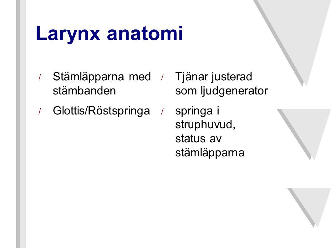 / Stämläpparna med stämbanden / Glottis/Röstspringa / Tjänar justerad som ljudgenerator / springa i struphuvud, status av stämläpparna Larynx anatomi