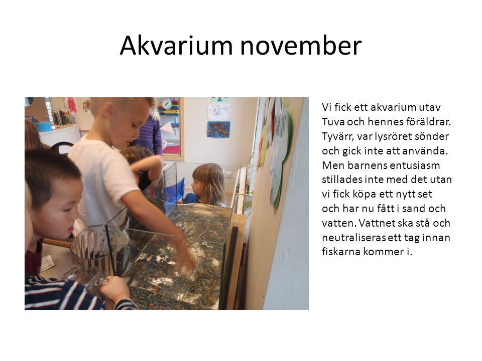 Akvarium november Vi fick ett akvarium utav Tuva och hennes föräldrar.