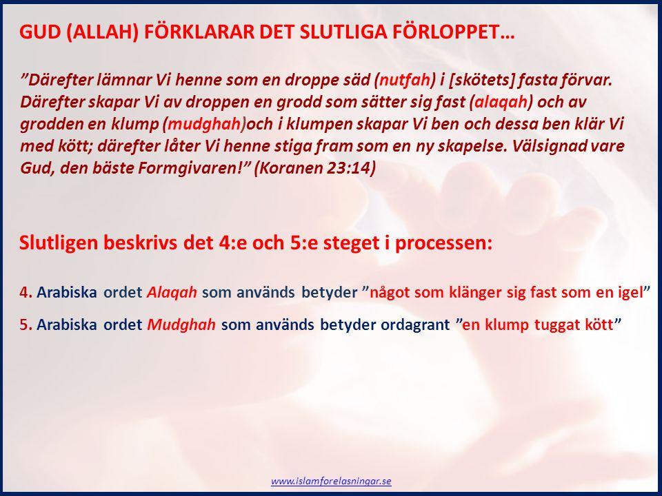 GUD (ALLAH) FÖRKLARAR DET SLUTLIGA FÖRLOPPET… Slutligen beskrivs det 4:e och 5:e steget i processen: 4.