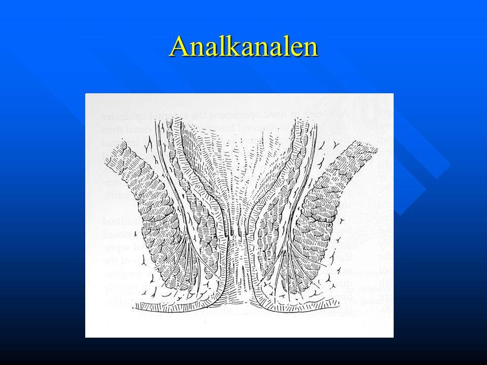 Analkanalen