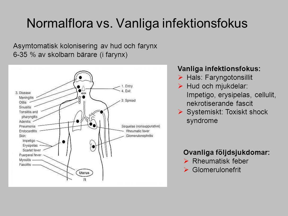 Normalflora vs.