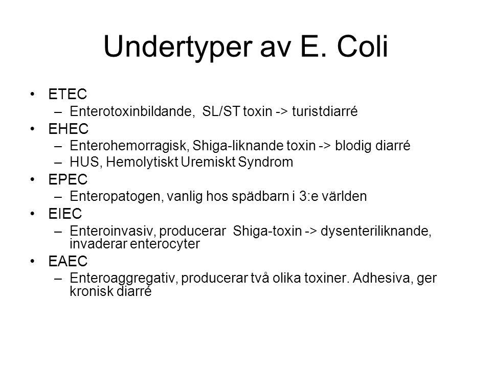 Undertyper av E.