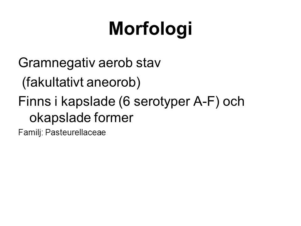 Morfologi Gramnegativ aerob stav (fakultativt aneorob) Finns i kapslade (6 serotyper A-F) och okapslade former Familj: Pasteurellaceae