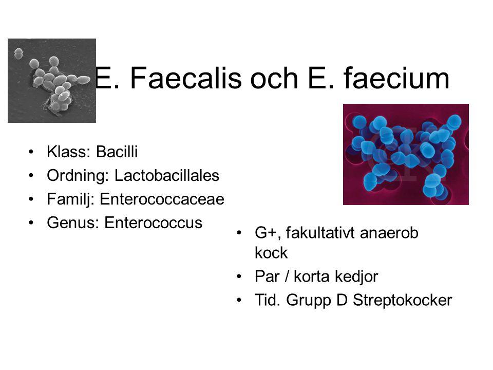 E.Faecalis och E.