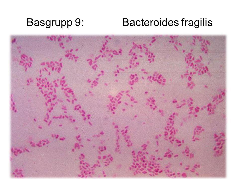 Basgrupp 9:Bacteroides fragilis