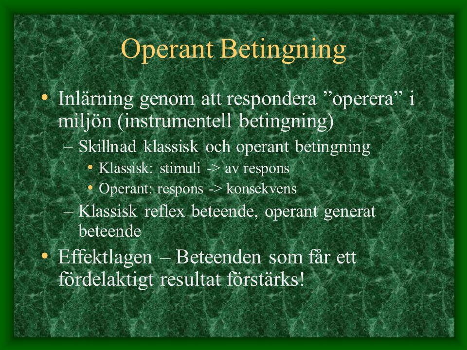 """Operant Betingning Inlärning genom att respondera """"operera"""" i miljön (instrumentell betingning) –Skillnad klassisk och operant betingning Klassisk: st"""