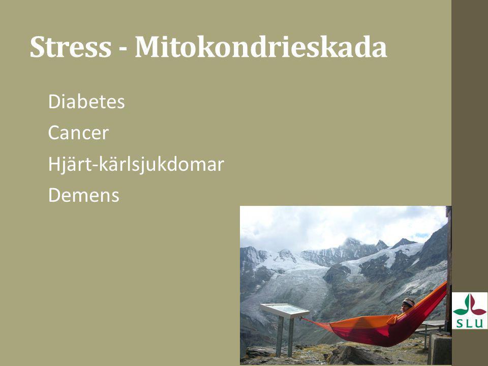 Stress - Mitokondrieskada Diabetes Cancer Hjärt-kärlsjukdomar Demens