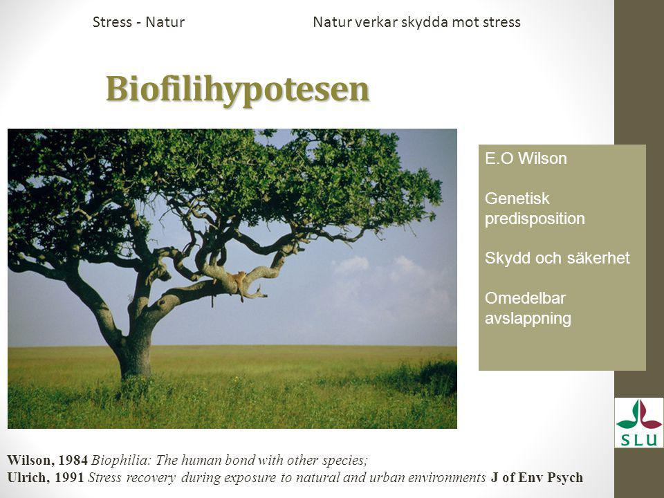 Biofilihypotesen Biofilihypotesen E.O Wilson Genetisk predisposition Skydd och säkerhet Omedelbar avslappning Natur verkar skydda mot stressStress - Natur Wilson, 1984 Biophilia: The human bond with other species; Ulrich, 1991 Stress recovery during exposure to natural and urban environments J of Env Psych