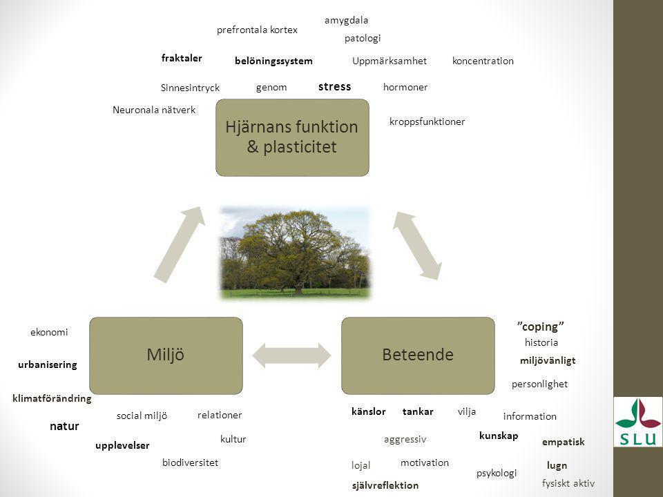 Hjärnans funktion & plasticitet BeteendeMiljö genom stress hormoner fraktaler patologi Uppmärksamhet koncentrationbelöningssystem Neuronala nätverk kr