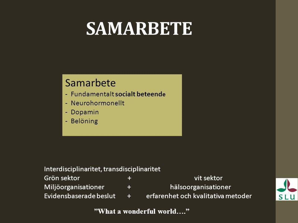 SAMARBETE Samarbete -Fundamentalt socialt beteend e -Neurohormonellt -Dopamin -Belöning Interdisciplinaritet, transdisciplinaritet Grön sektor + vit s