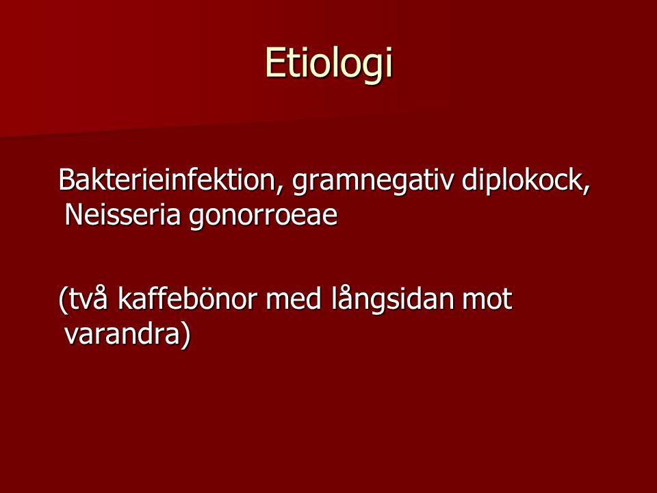 Gonokocken kan till skillnad mot klamydia ses i mikroskop Gonokocken kan till skillnad mot klamydia ses i mikroskop Flytning från uretra eller cervix sätts på objektglas Flytning från uretra eller cervix sätts på objektglas Färgas med metylenblått Färgas med metylenblått Mikroskopi i 1000 gångers förstoring Mikroskopi i 1000 gångers förstoring Leukocytos med ic diplokocker ger diagnos Leukocytos med ic diplokocker ger diagnos