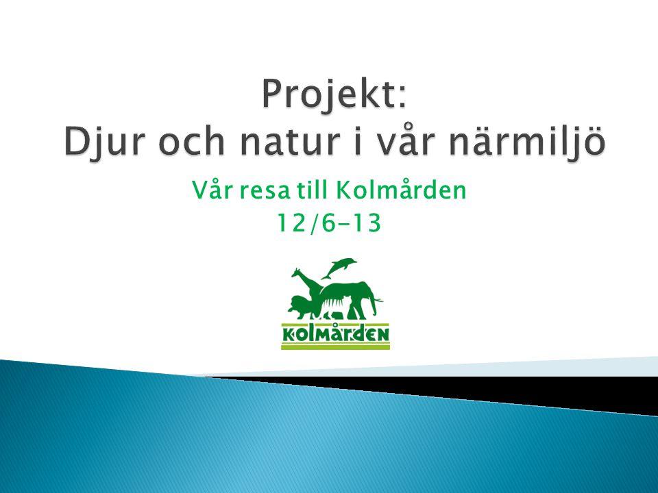 Vår resa till Kolmården 12/6-13
