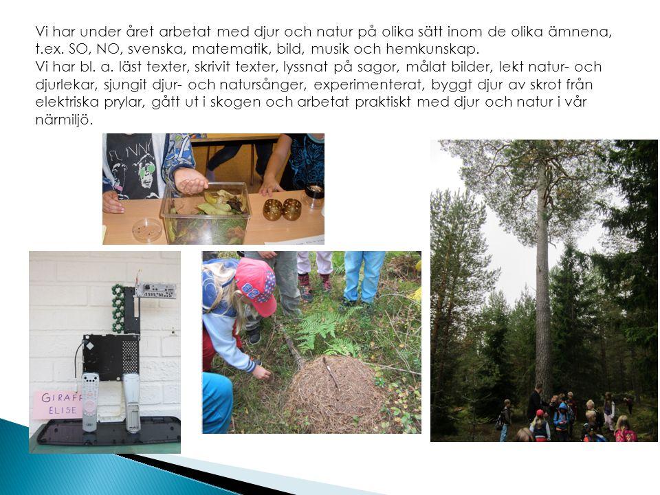 Vi har under året arbetat med djur och natur på olika sätt inom de olika ämnena, t.ex. SO, NO, svenska, matematik, bild, musik och hemkunskap. Vi har