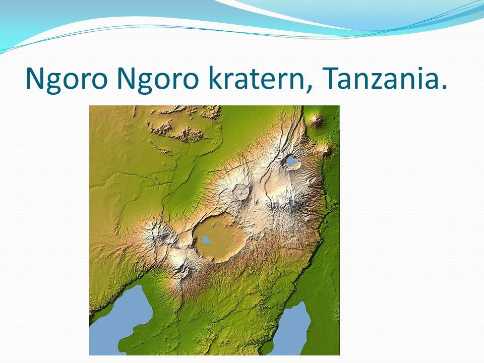 Ngoro Ngoro kratern, Tanzania.