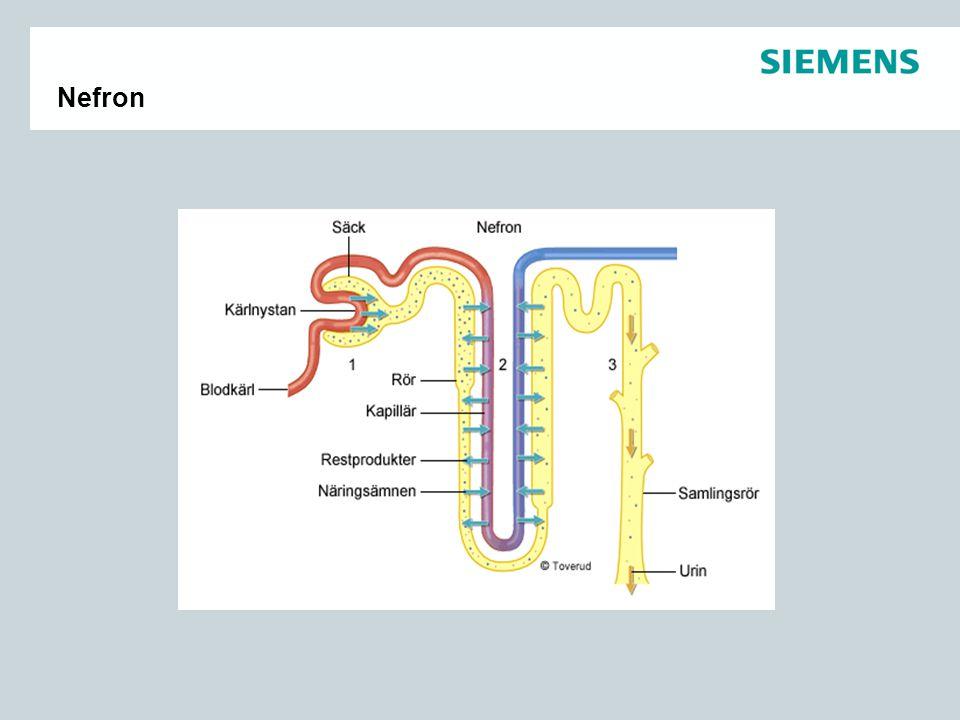 Njurfunktion  Filtration  1800L blod/dygn  180L primärurin  1,5L = normal urinmängd  Ca 1,2 10 6 nefron/njure.