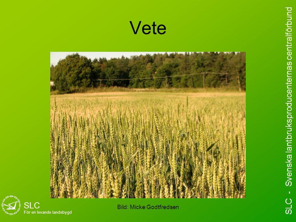 Vete Bild: Micke Godtfredsen SLC För en levande landsbygd SLC - Svenska lantbruksproducenternas centralförbund
