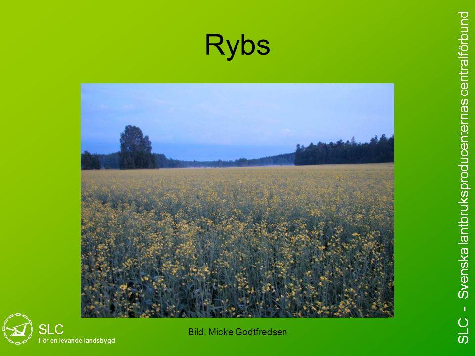 Rybs Bild: Micke Godtfredsen SLC För en levande landsbygd SLC - Svenska lantbruksproducenternas centralförbund