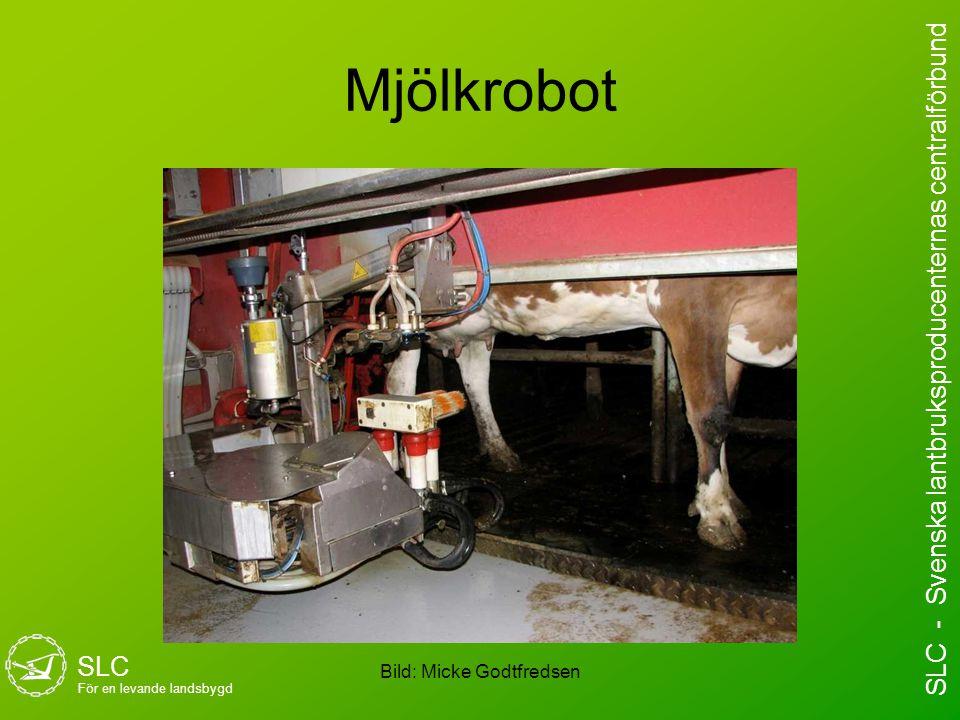 Mjölkrobot Bild: Micke Godtfredsen SLC För en levande landsbygd SLC - Svenska lantbruksproducenternas centralförbund