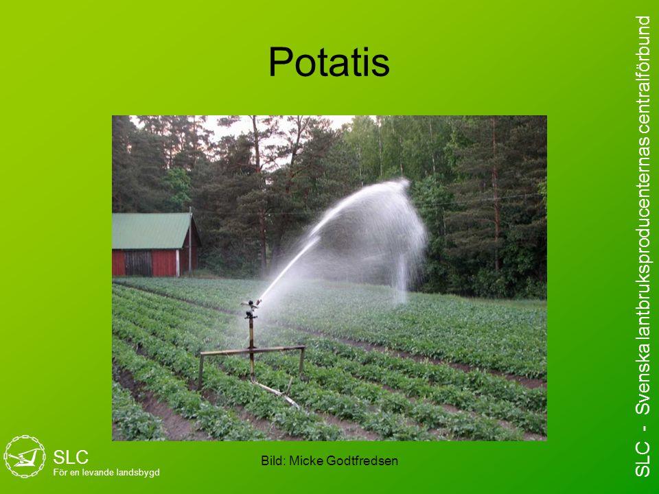 Potatis Bild: Micke Godtfredsen SLC För en levande landsbygd SLC - Svenska lantbruksproducenternas centralförbund