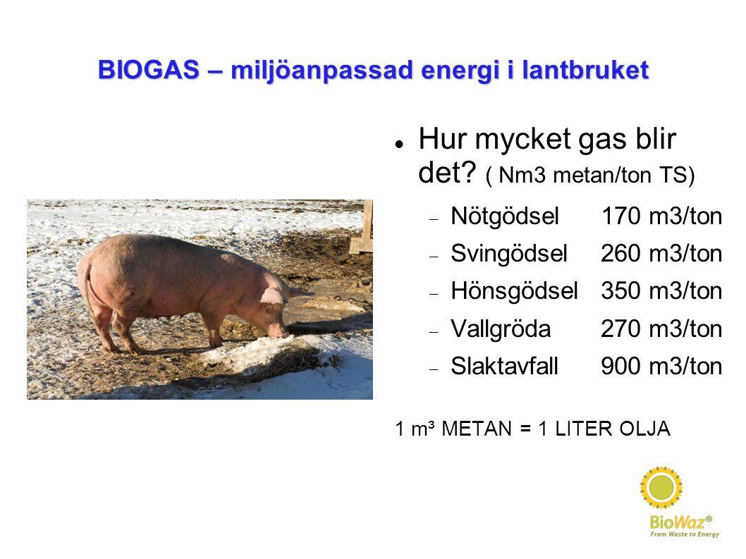 BIOGAS – miljöanpassad energi i lantbruket Hur mycket gas blir det? ( Nm3 metan/ton TS)  Nötgödsel170 m3/ton  Svingödsel260 m3/ton  Hönsgödsel350 m