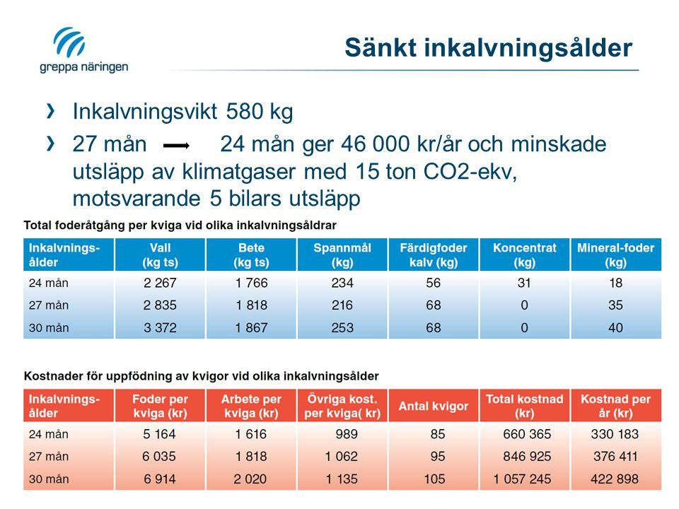 Sänkt inkalvningsålder Inkalvningsvikt 580 kg 27 mån 24 mån ger 46 000 kr/år och minskade utsläpp av klimatgaser med 15 ton CO2-ekv, motsvarande 5 bil