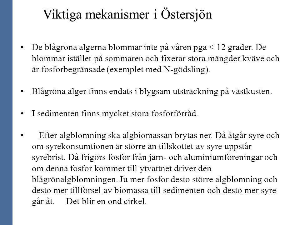 Viktiga mekanismer i Östersjön De blågröna algerna blommar inte på våren pga < 12 grader. De blommar istället på sommaren och fixerar stora mängder kv