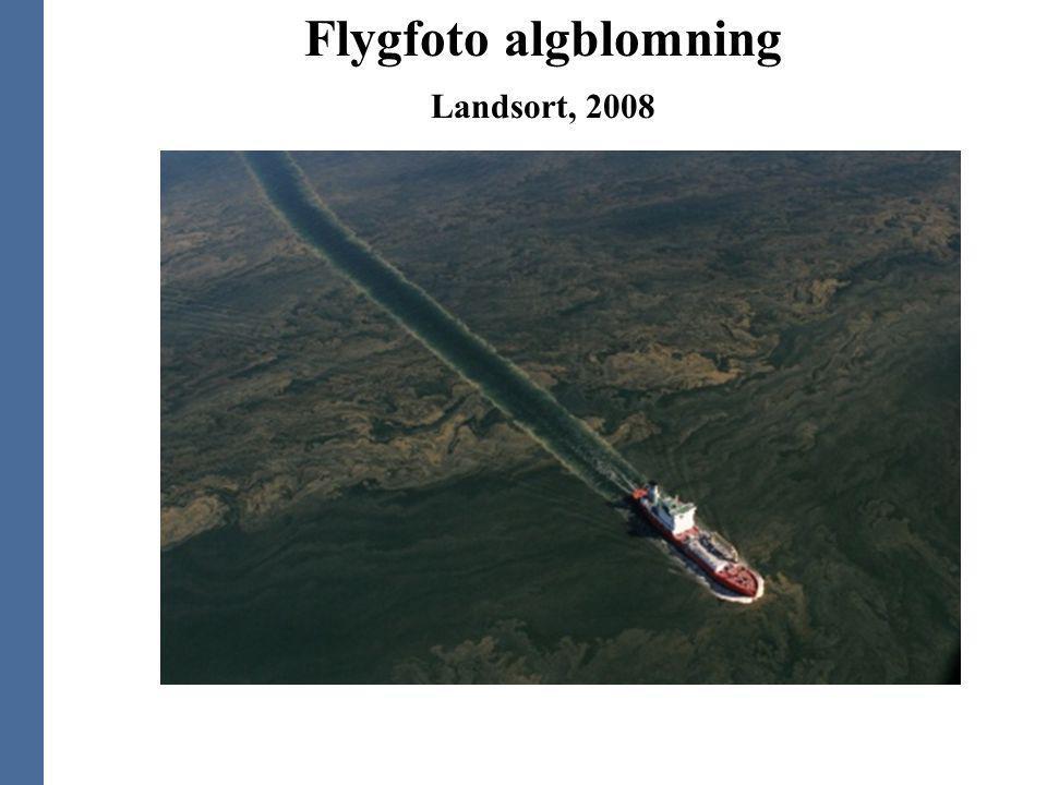 Flygfoto algblomning Landsort, 2008