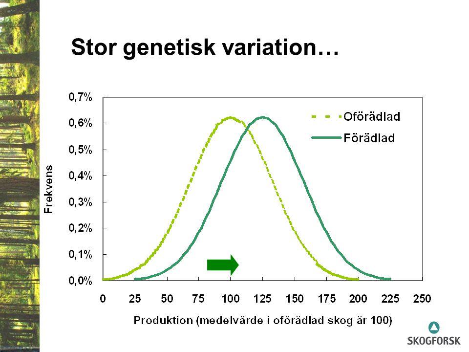 Stor genetisk variation…