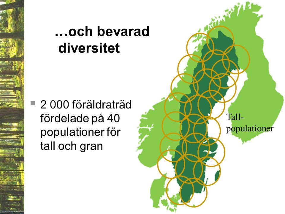  2 000 föräldraträd fördelade på 40 populationer för tall och gran …och bevarad diversitet Tall- populationer
