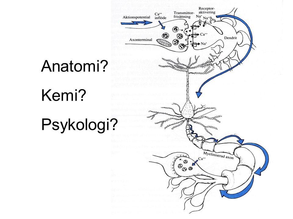 Lena Wallmark / NPF 2009 Anatomi? Kemi? Psykologi?