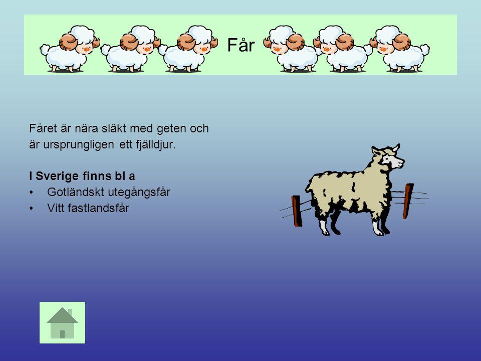 Höns Härstammar från Indien Har funnits i Sverige i ca 2000 år Vanliga raser är Vit leghorn Dvärghöns Silkeshöns